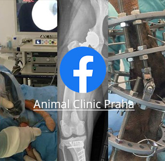 Animal Clinic facebook